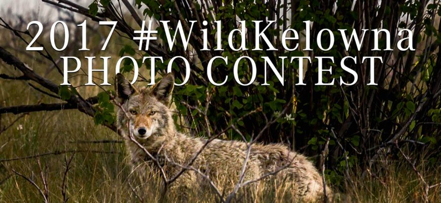 3rd Annual #WildKelowna Photo Contest